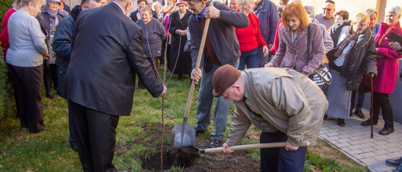 Meggyfát ültettek Tu Bisvát alkalmából a debreceni zsinagóga kertjében