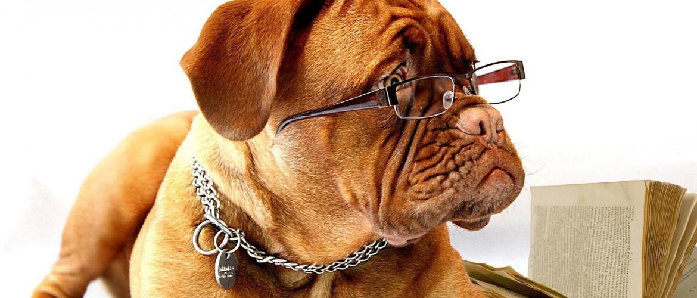Kutyások, figyelem: izraeli kutatók megcsinálták a távirányítós kutyát