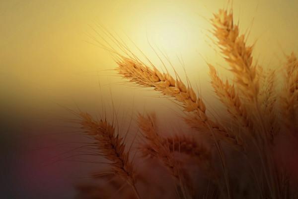 Spirituális meditáció és Ómer-számlálás: a harmónia köre