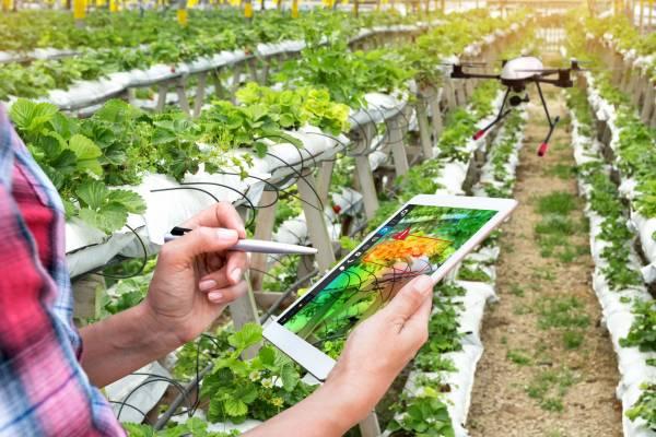 Az izraeli mezőgazdaság titkai – agrárkonferencia az interneten