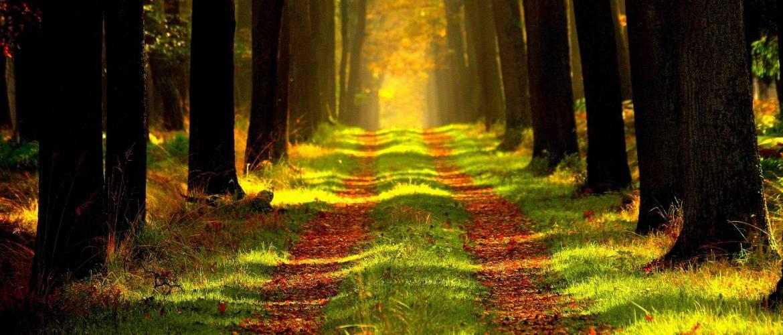 Kurucz Ákos rabbijelölt: Ne vágd ki a fákat!