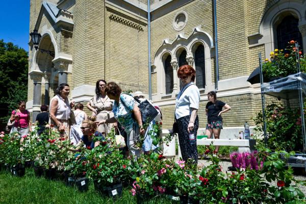 Rózsanapot tartottak a szegedi zsinagóga kertjében