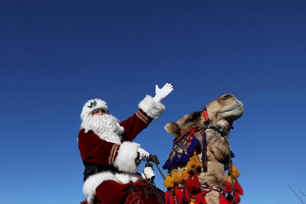 A jeruzsálemi palesztin Mikulás tevén szállított karácsonyfákat